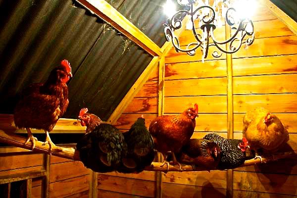 04-chicken-coop