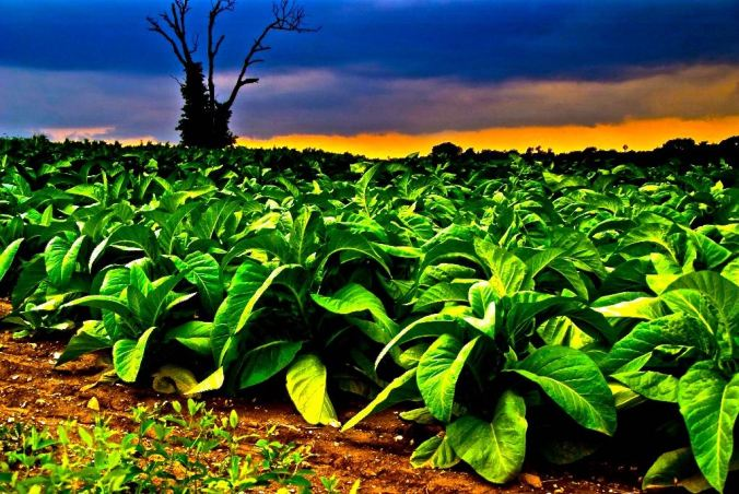 tob-plant-1024x685