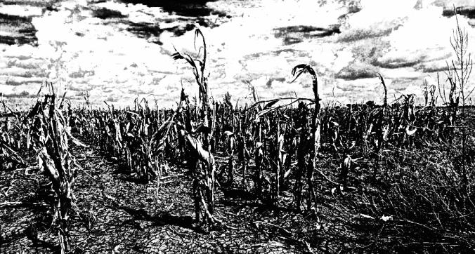 Drought-Texas-940x626